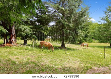 Beautiful Horses Eating On Large Farm Field