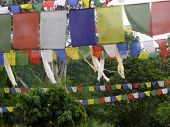 pic of nepali  - Traditional colorful Nepali prayer flags at Lumbini birthplace of Buddha.