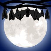 foto of bat wings  - Hanging bats on branch of tree - JPG