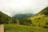 Cocora Valley, Natural Park Of Colombia