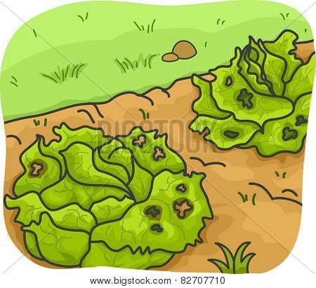 Illustration of Vegetables Infested With Disease