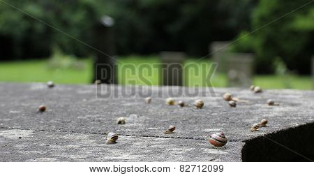 Slugs On Stone