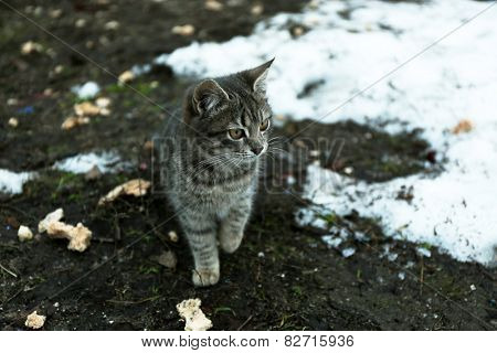 Homeless cat outdoors