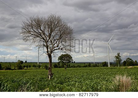 Wind Turbines, Pure Energy,windmills In The Fields In Thailand
