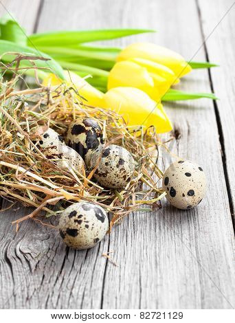Quail Eggs With Tulips