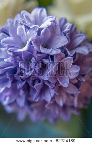Beautiful purple bell flower