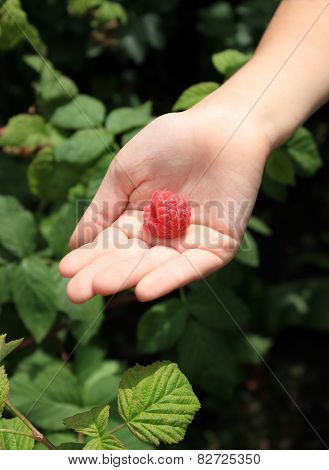 Big Raspberry On Child's Palm