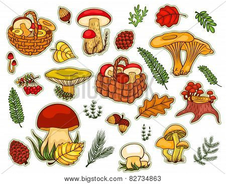 Mushrooms Set Isolated On White