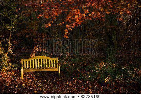 Quiet Autumn