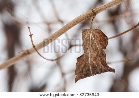 Twig With Dried Leaf. Autumn Nature Landscape. Tree Branch. Retro (pastel) Colors. Macro. Closeup. S
