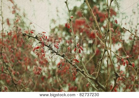 Nature Landscape: cotoneaster branch