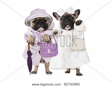 French Bulldog Puppies Dressed As A Dolls With Hand Bags