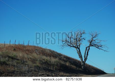 Lonely Tree on the Hillside
