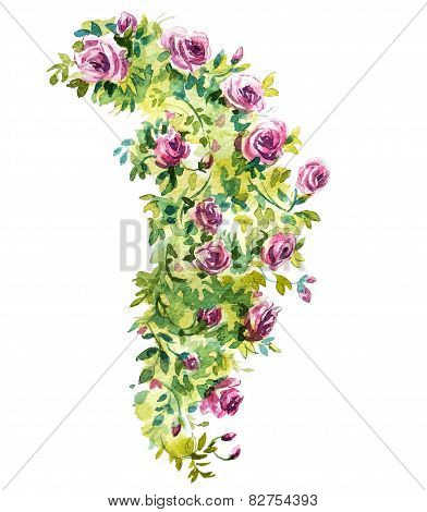 Rose bush watercolor sketch. Vector illustration.