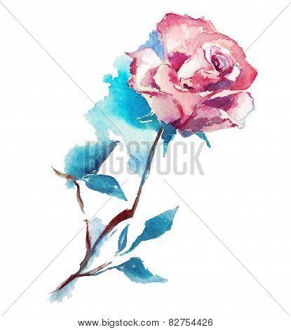 rose watercolor sketch. Vector illustration