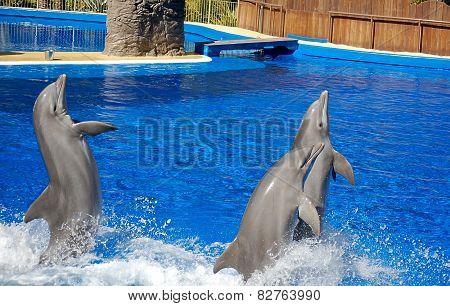 Three bottlenosed dolphins