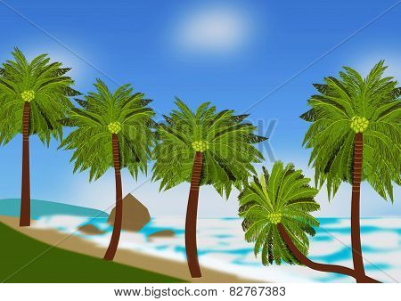 Beach Scene With Coconut Palms