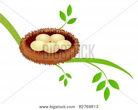 Bird Nest On Branch With Eggs