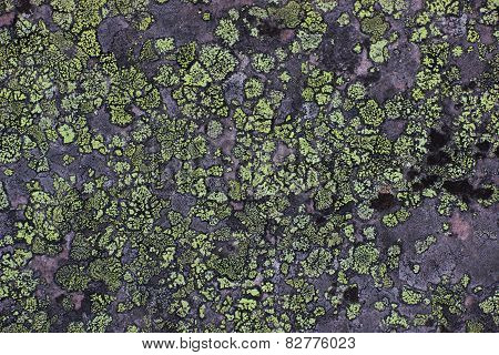 Lichen Background