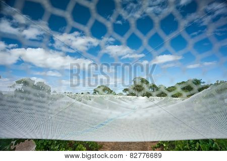 Fully Netted