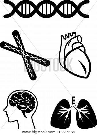 medische symbolen van menselijke orgel