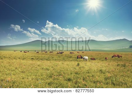 skyline,meadow and horse in tibet