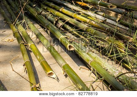 Bamboo Cylindrical, Yellow, Dry, Green, Bamboo Pile.