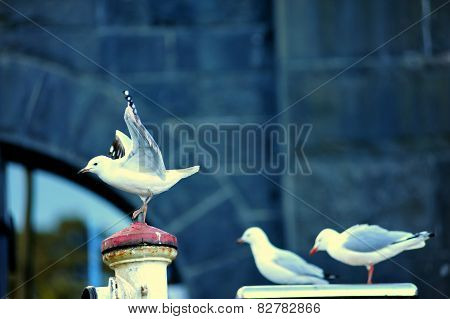 Some sea gulls ready to fly