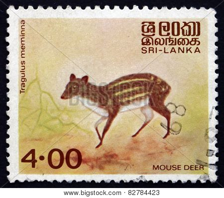 Postage Stamp Sri Lanka 1982 Mouse Deer