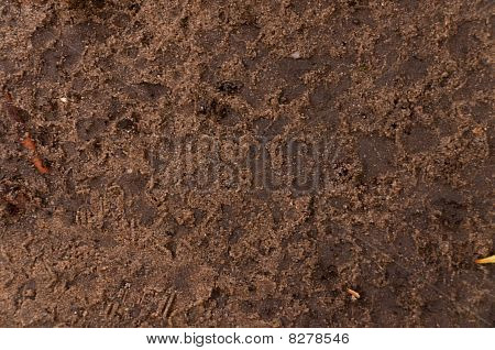 Brown Sand Texture