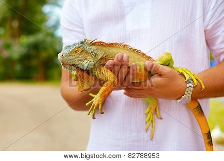 Young Man, Herpetologist Holding Colorful Iguana Reptile