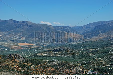 Spanish olive groves, Jaen.