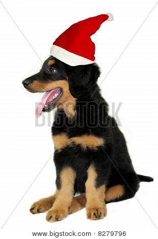 Young puppy Santa