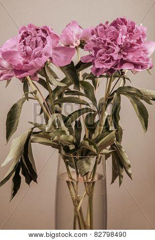 Bouquet of peonies in vase