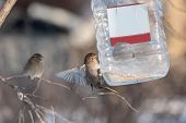 foto of trough  - sparrow flies up to the food trough - JPG