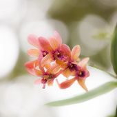 picture of orquidea  - stock photo orchid colorful with pink purple white and green shade under the sunlight - JPG