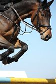 pic of horse-riders  - Close up of brown show jumping horse - JPG