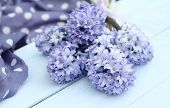 Постер, плакат: Blue purple hyacinth on duck egg blue