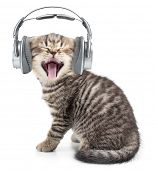 foto of little puppy  - Singing funny cat or kitten in headphones listening music - JPG