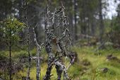 image of dead plant  - Dead plants in a Swedish bog in V