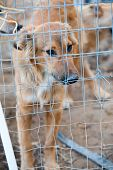 foto of stray dog  - Stray dog behind the corral of a dog refuge - JPG