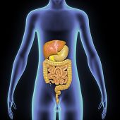 foto of digestion  - In the human digestive system - JPG