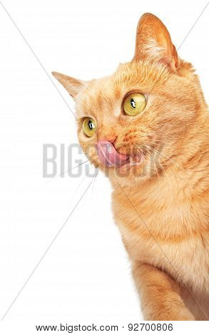 Cat Licking Its Lips With Copy Space