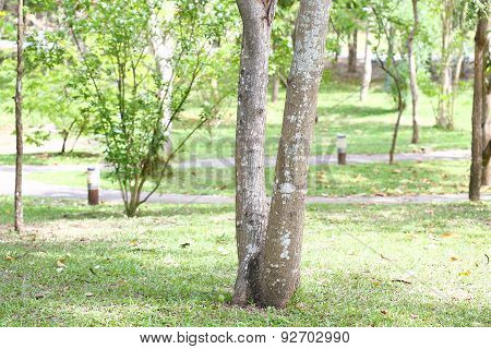 Trees in the Garden