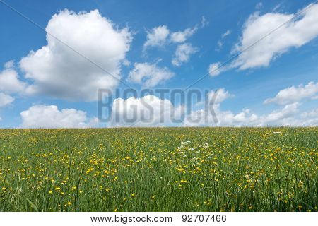 Yellow blooming spring meadow