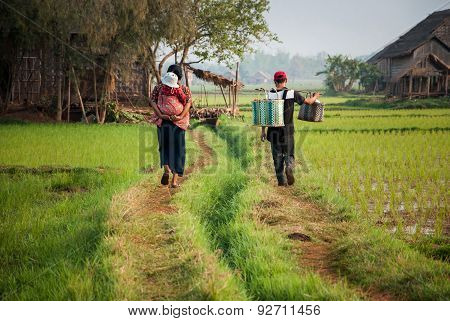 Family Walk On The Way Among Rice Field In Myanmar