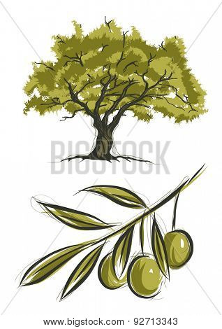 Vector sketch of olive tree
