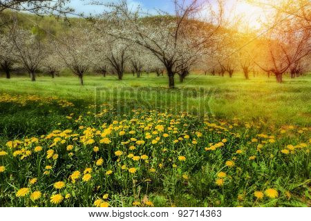 Beautiful Meadow In The Morning