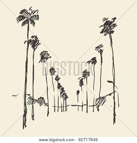 Palms, Skyline Engraved Sketch