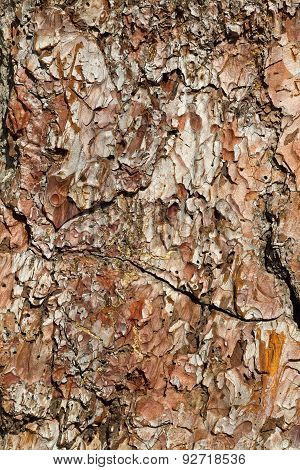 A Full Detail View Of A Tree Bark With Interesting Shapes And Textures